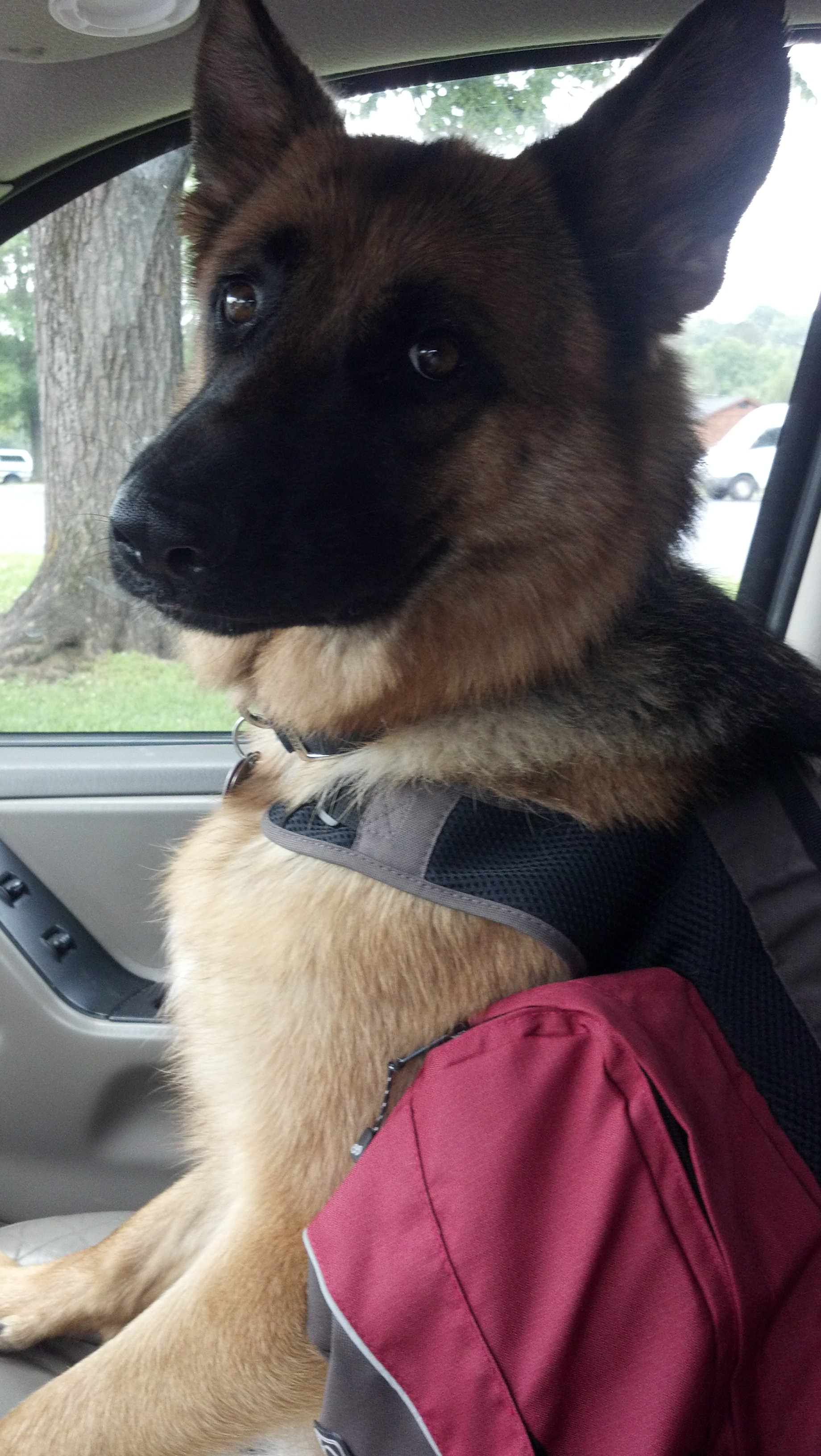 GSD backpack