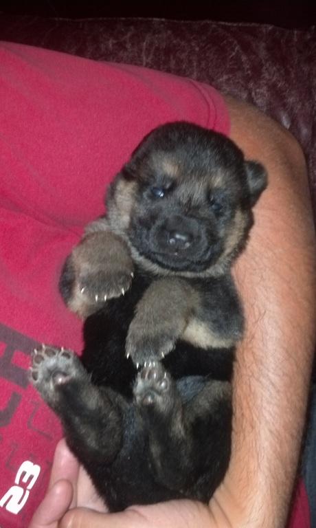 puppy 6-16-13
