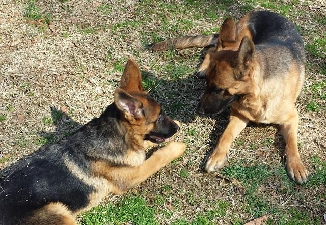aura and puppy