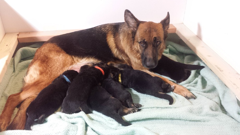 aura and puppies