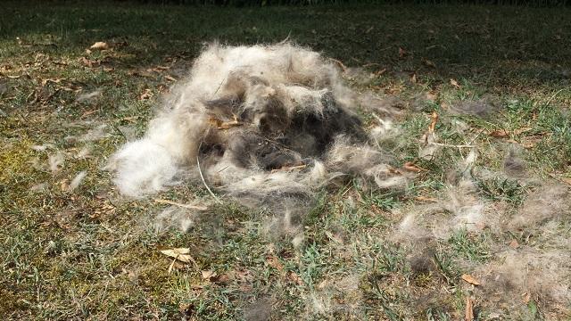 huge pile of fur