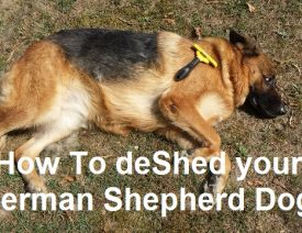 Best Deshedding Tool for German Shepherds