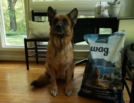 Amazon Wag Dry Dog Food Review for German Shepherds