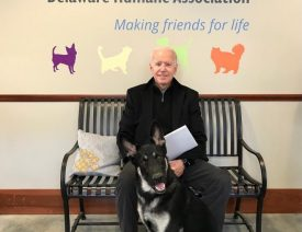 "Meet Joe Biden's German Shepherd ""Major"""