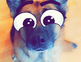 Big Eye Snapchat Dog Filter and How To Use It