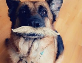 Mustache Snapchat Dog Filter and How To Use It