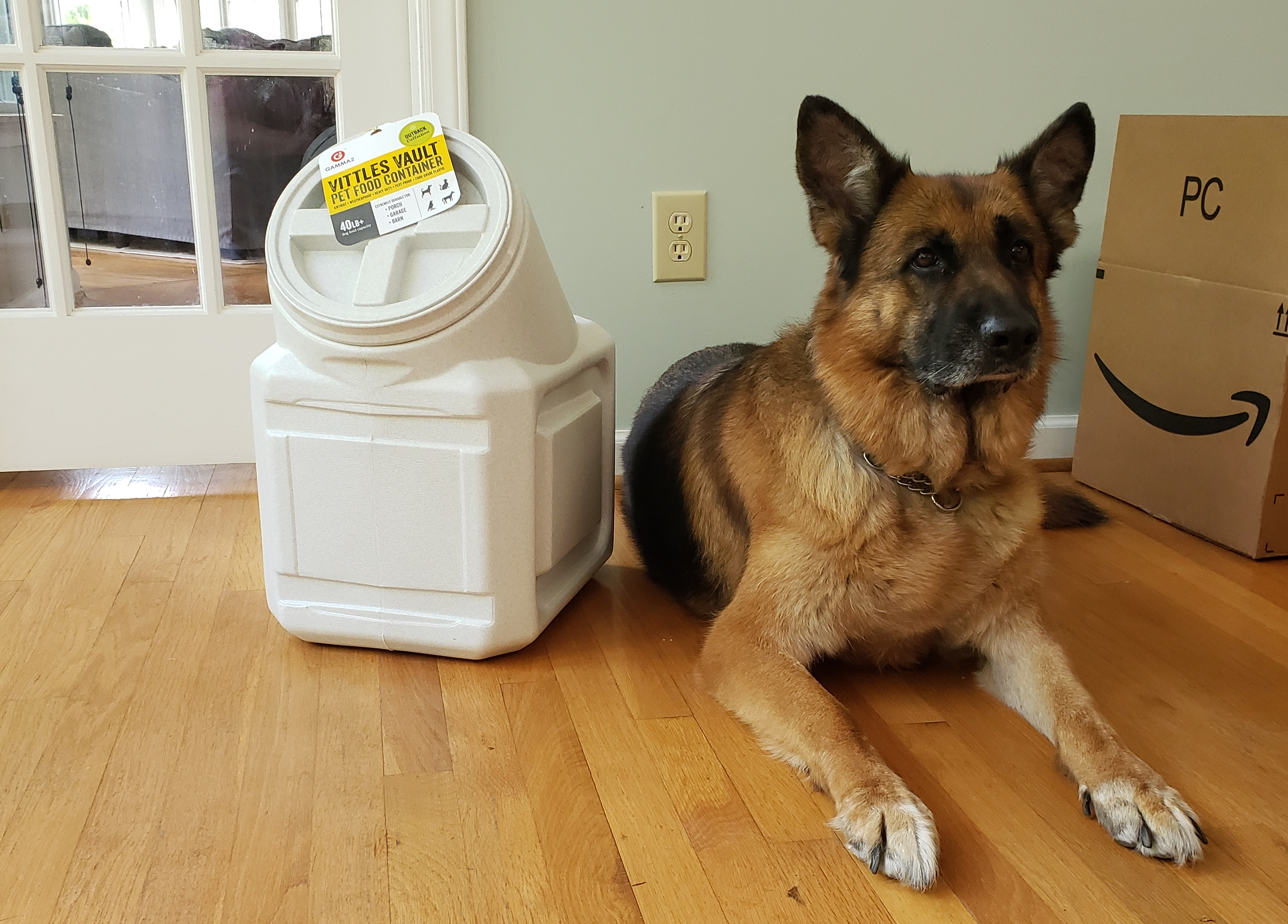 Aura German Shepherd Dog beside her new dog food container