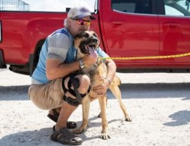 German Shepherd Dog and Owner Reunited After Hurricane Laura